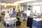 Processing fish in the OMNR fish lab at Port Dover