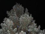 Kingston Christmas Tree Lights