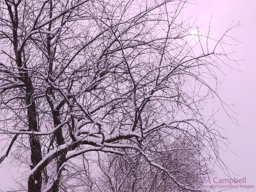 Snowy trees against pink overcast sky