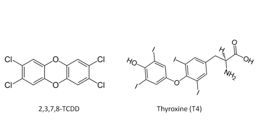2,3,7,8-TCDD and Throxine