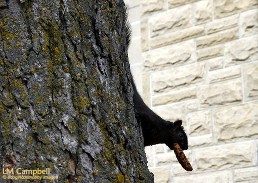 A squirrel with a cookie on a tree