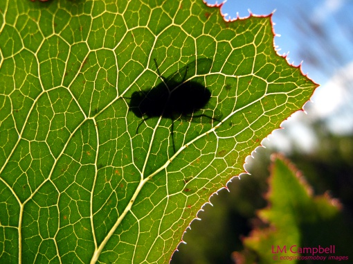 The shadow of a backlit fly against a leaf