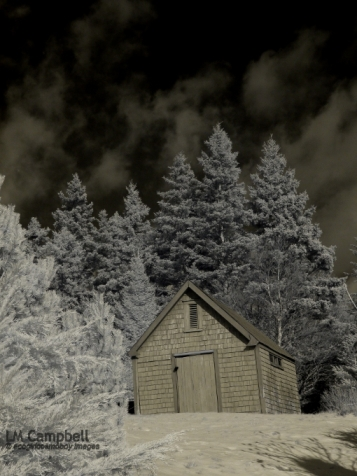 Stained artist's shed surrounded by conifers in infrared