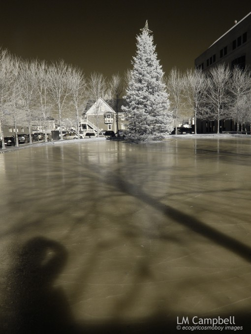 Own & tree shadows & reflections  on skating rink