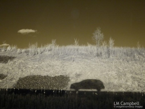 Shadow of car along the highway in infrared